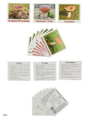 Набор обучащих карточек МИНИ-20 Грибы Вундеркинд с пеленок. Цвет: зеленый