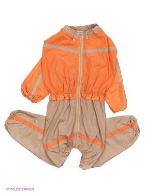 Дождевик холодный (Родезийский Риджбек), девочка ТУЗИК. Цвет: оранжевый