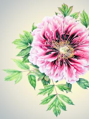 Наволочка Цветы 3 Матренин Посад. Цвет: розовый, зеленый