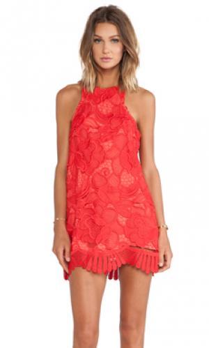 Платье-футляр caspian Lovers + Friends. Цвет: красный