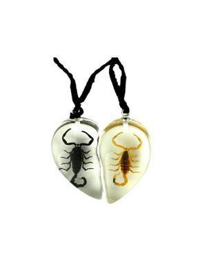 В Мире Насекомых Черный Скорпион/Золотой Скорпион Кулон 2в1 Склад Уникальных Товаров. Цвет: прозрачный