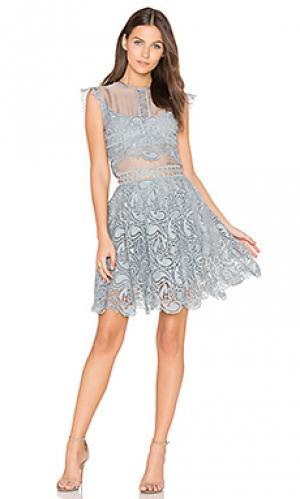 Кружевное мини-платье manhattan Karina Grimaldi. Цвет: аспидно-серый