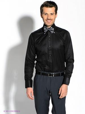 Рубашка Alex DANDY. Цвет: черный