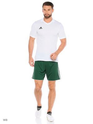 Шорты TASTIGO17 SHO  CGREEN/WHITE Adidas. Цвет: зеленый
