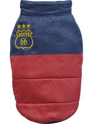 Куртка Doggy Dolly. Цвет: синий