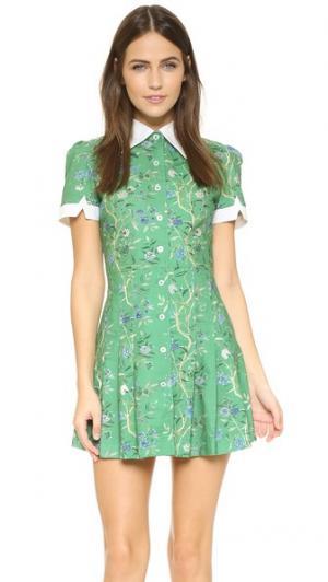 Платье Wallflower Samantha Pleet. Цвет: зеленые обои