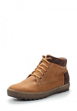 Ботинки Giatoma Niccoli. Цвет: коричневый