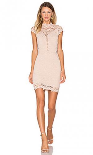 Мини платье lace 16th district Nightcap. Цвет: румянец