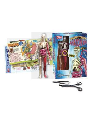 Увлекательная анатомия. Мой организм Fantastic. Цвет: голубой