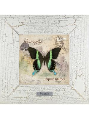 Картина-сувенир Papilio blumei Ceramic Picture. Цвет: бежевый