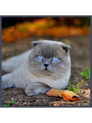 Декоративная шёлковая наволочка  КРАСАВЧИК 45х45 см Рапира. Цвет: серый, коричневый, голубой