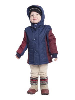 Куртка Born. Цвет: темно-синий, бордовый