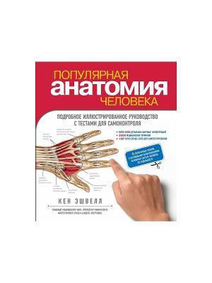 Популярная анатомия человека. Подробное иллюстрированное руководство с тестами для самоконтроля Эксмо. Цвет: белый