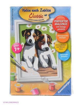 Раскрашивание по номерам  Забавные щенки Размер картинки Ravensburger. Цвет: зеленый