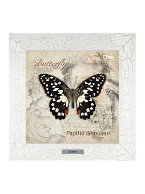 Картина-сувенир Papilio demoleus Ceramic Picture. Цвет: бежевый