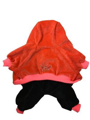 Спортивный костюм с капюшоном Pet's Fashion. Цвет: оранжевый