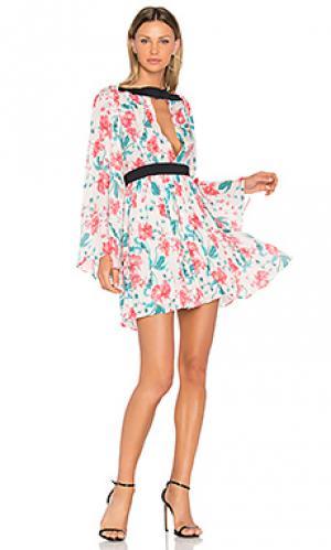 Платье jessa SAM&LAVI. Цвет: ivory