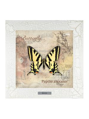 Картина-сувенир Papilio alexanor Ceramic Picture. Цвет: бежевый
