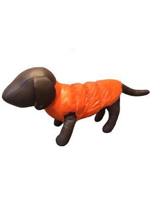 Жилетка Pet's Fashion. Цвет: оранжевый