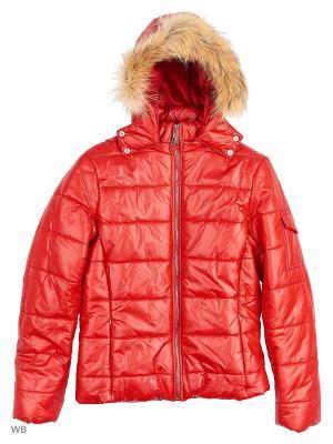 Куртки Senso kids. Цвет: красный
