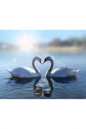 Холст Два лебедя Ecoramka. Цвет: белый, голубой
