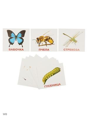 Набор обучающих карточек Мои первые знания Вундеркинд с пеленок. Цвет: белый