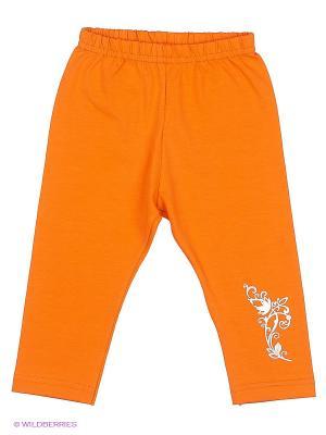 Лосины Лео. Цвет: оранжевый