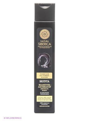 Шампунь-активатор для роста волос Белуга Natura Siberica. Цвет: черный