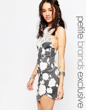 Tiger Mist Petite Облегающее кружевное платье с лямкой через шею Freed. Цвет: черный