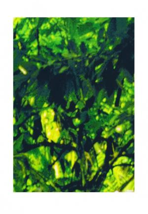 Комплект штор 2 шт. ТомДом. Цвет: зеленый