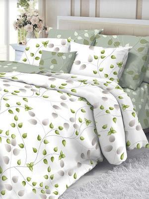 Комплект постельного белья Verossa. Цвет: белый, зеленый