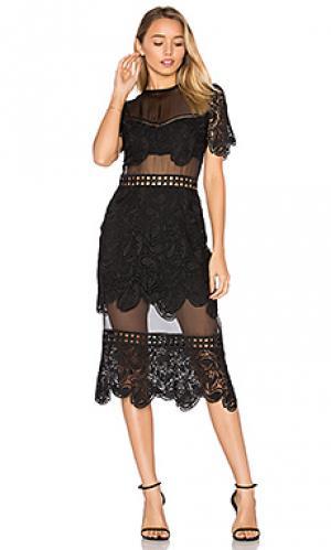 Кружевное платье soho Karina Grimaldi. Цвет: черный