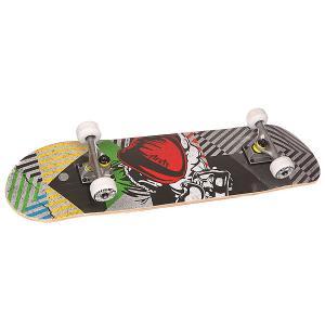 Скейтборд в сборе  Boxer Multi 31 x 7.6 (19.3 см) Fun4U. Цвет: мультиколор