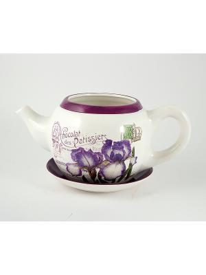 Цветник садовый Чайник Ирисы Русские подарки. Цвет: сливовый, белый