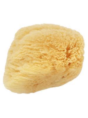 Натуральная морская губка для тела CLARETTE. Цвет: светло-желтый