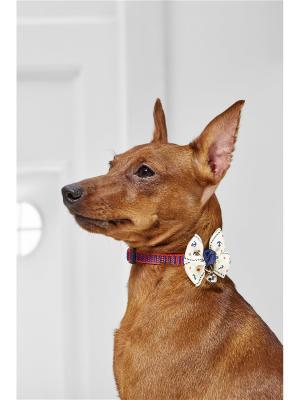Текстильный ошейник с бабочкой для мелких пород собак весом до 6 кг и объемом шеи 19-28 см Nothing but Love. Цвет: красный, кремовый, синий