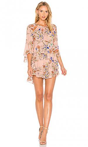 Платье с принтом emmeline Marissa Webb. Цвет: rose