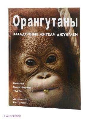 Орангутаны: Загадочные жители джунглей. Привычки, среда обитания, защита КОНТЭНТ. Цвет: коричневый
