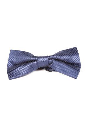 Бабочка Franco Frego. Цвет: синий