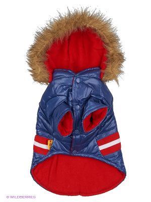 Куртка Lovabledog. Цвет: синий