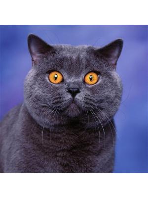 Декоративная шёлковая наволочка БРИТАНЕЦ 45х45 см Рапира. Цвет: синий, оранжевый, черный
