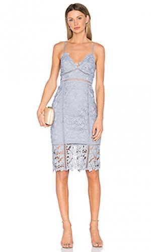 Кружевное платье botanica Bardot. Цвет: синий