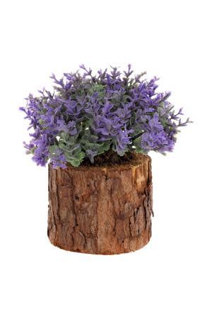 Интерьерное растение в горшке Creative. Цвет: сиреневый