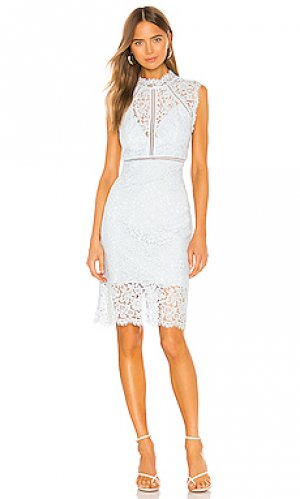 Мини платье lace panel Bardot. Цвет: синий